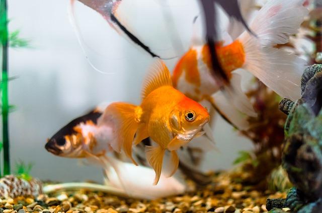 Akváriové rybky