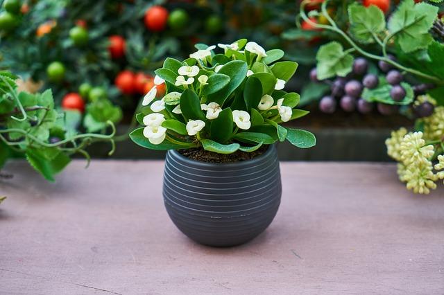 Doprajte izbovým rastlinám dostatok svetla a vody