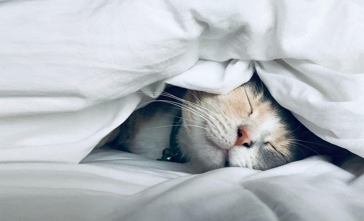 sleeping-cat-cro